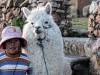 Bolivia-Cile-1080660