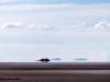 Bolivia-Cile-1070880