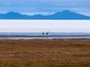 Bolivia-Cile-1080155