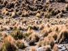 Bolivia-Cile-1070296