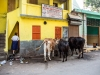 Kolkata-35462