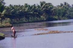 Kerala 2006