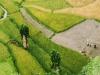 Trekking-Nepal-1040508