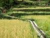 Trekking-Nepal-1040746