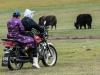 -Mongolia-2018-1020877