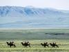 Mongolia20181040577