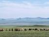 Mongolia20181040586