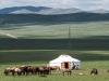 Mongolia20181060785