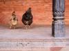 nepal_colors05-jpg
