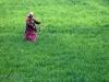 nepal_colors78-jpg