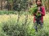 Trekking-Nepal-1040423