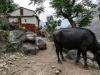 Trekking-Nepal-1040435