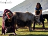 mg_7486_tibet