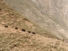 Trekking-Nepal-1050088