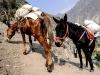 Trekking-Nepal-1050151