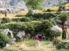 Trekking-Nepal-1050163