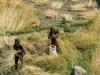 Trekking-Nepal-1050168