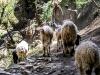 Trekk-Nepal-1020992
