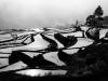 Yunnan-30468