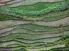 Yunnan-30304